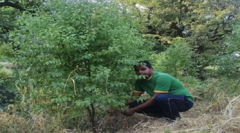 चमोली के एक युवक ने पहाड़ के लोगों के लिए एक मिसाल पेश की है। कर्णप्रयाग ब्लॉक के ग्वाड़ गांव के रहने वाले प्रदीप कुंवर ने अपनी जमीन पर चंदन का छोटा सा जंगल उगा दिया।