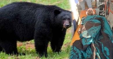 चमोली में भालू का आतंक! बाजार गए युवक पर किया हमला, खौफ में जी रहे इलाके के लोग