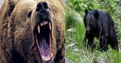 पौड़ी गढ़वाल: खेत में गई महिला पर भालू ने घात लगाकर किया हमला, मच गई चीख पुकार