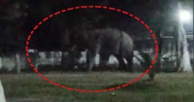 हरिद्वार: अस्पताल परिसर में हाथियों के घुसने के मचा हड़कंप, अटकी रही लोगों की सांसें