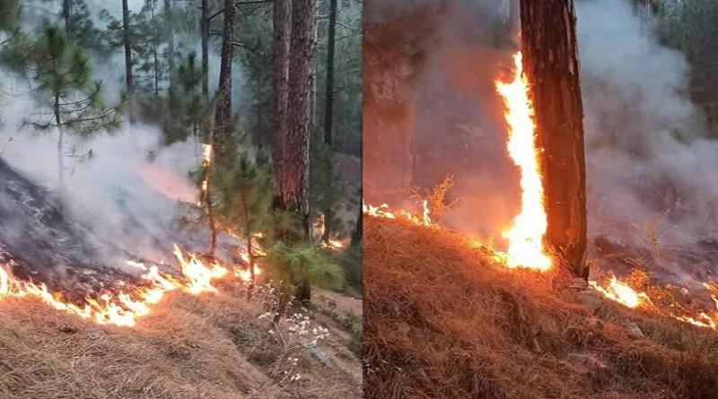 उत्तरकाशी के टौंस वन प्रभाग के जंगलों में आग का तांडव जारी है। ये इलाका करीब 4 किलोमीटर के रेंज में सुग रहा है।