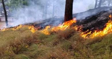 कड़ाके की ठंड के बीच नैनीताल के जंगलों में लगी आग, वन विभाग परेशान