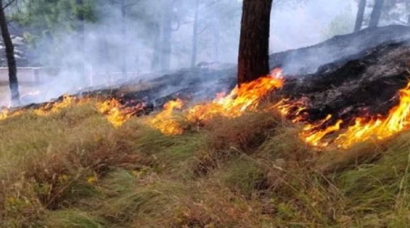 पिथौरागढ़ के जंगलों में आग लगने का सिलसिला जारी है। रविवार को रई धनौड़ा और सातसिलिंग क्षेत्र के जंगलों में आग लग गई।