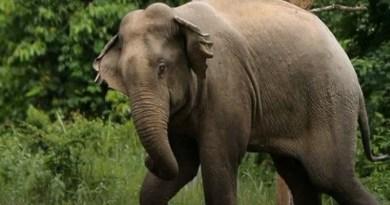 अलर्ट: उत्तराखंड के जिले में हाथियों का आतंक! गजराज की दस्तक से खौफजदा लोग