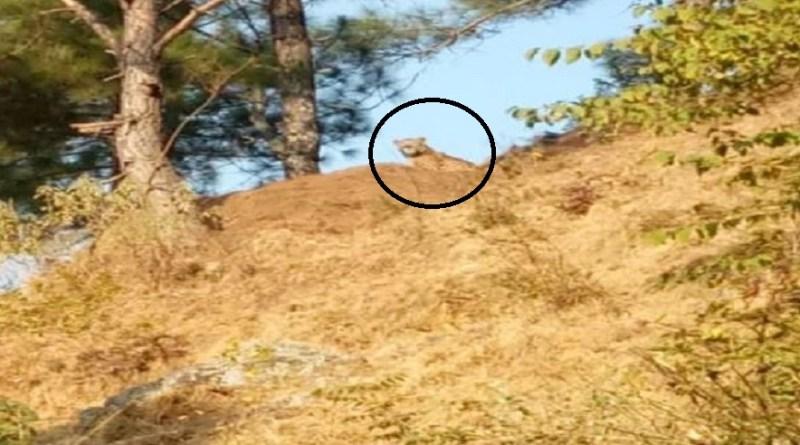 अल्मोड़ा में पिछले कुछ दिनों में गुलदार का आतंक काफी बढ़ गय है। बरारौ घाटी में बढ़ रहे गुलदार हमलों से लोगों में दहशत है।