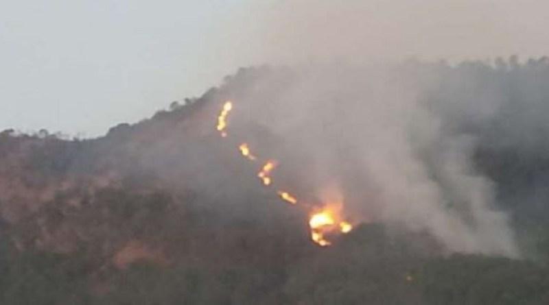 चंपावत में ग्राम सभा पाटन पाटनी और ग्राम सभा पम्दा के जंगलों में भयंकर आग लग गई है। आग लगने से छोटे छोटे बॉज, बुराश, फल्याठ, उतीश सहित लाखों की वन संपदा जल कर राख हो गई है।