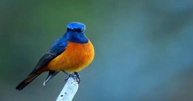 टूरिजम डिपार्टमेंट अपने इंस्टाग्राम पर खूबसूरत तस्वीरें और वीडियो भी डालता रहता है। पर्यटन विभाग ने इंस्टग्राम अकाउंट पर Blue-capped पक्षी का वीडियो शेयर करते हुए लिखा, 'अगर आप इस तरह के और वीडियो देखना चाहते हैं उत्तराखंड आइये'
