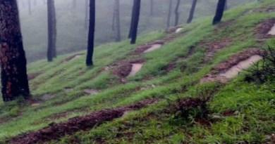 नेपाली वन तस्करों द्वार चंपावत के जंगल में लकड़ी की तस्करी के मामले बढ़ते जा रहे हैं। पड़ोसी मुल्क के तस्करों ने भारतीय क्षेत्र से दो पेड़ काट दिए।