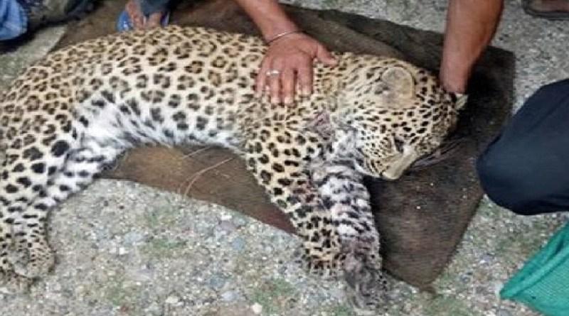 उत्तराखंड में एसटीएफ ने वन्य जीवों के अंगों की तस्करी करने वालों के खिलाफ बड़ी कार्रवाई की है।
