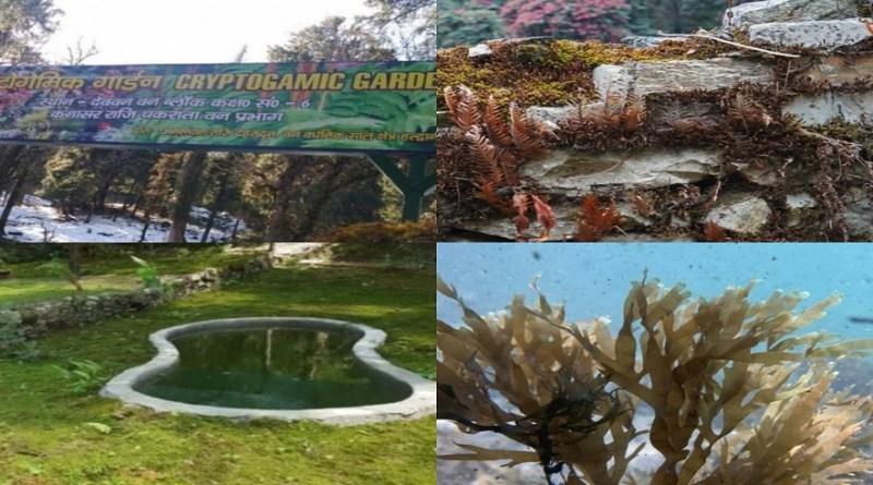 पर्यटकों को आकर्षित करने के लिए राजधानी देहरादून में देश का पहला पहला क्रिप्टोगैमिक उद्यान (first cryptogamic park of India) का चकराता क्षेत्र के देवबन में बनाया गया है।
