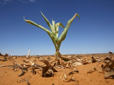 Lesotho's Drought