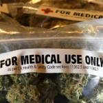 医療大麻裁判「それしか方法がない」「助けて」末期がん山本さん、裁判官に訴える…