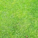 【悲報】阪神甲子園球場が過去最大の被害・・・ 「芝から異臭が漂う・・・」