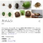 日本車から「カメムシ」発見→全車両強制返品wwwwww