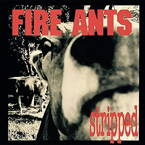 NEW SOUND EXPRESS UK CLASSIC GRUNGE PIONEERS: Get the rock n' roll 3 decade lowdown on Seattle grunge legends 'The Fire Ants' as they get you rocking and 'Stripped'