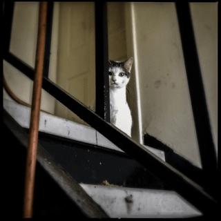 A stray cat at Terrace Manor