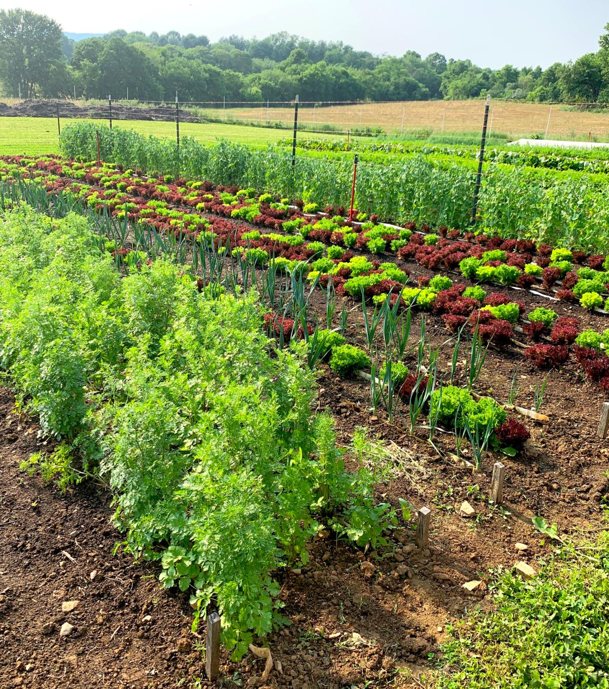 Root and Marrow Farm