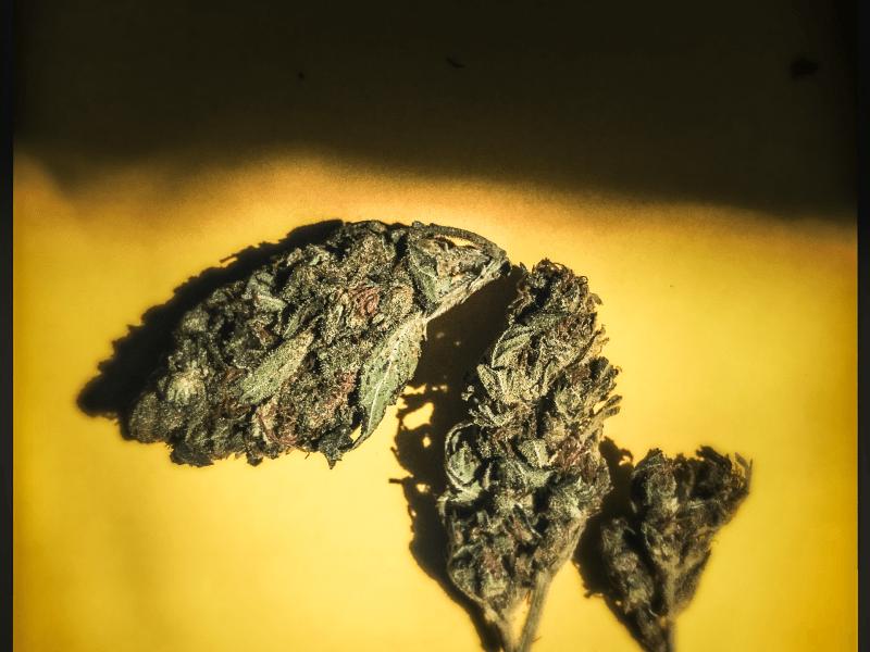 Marijuana close up