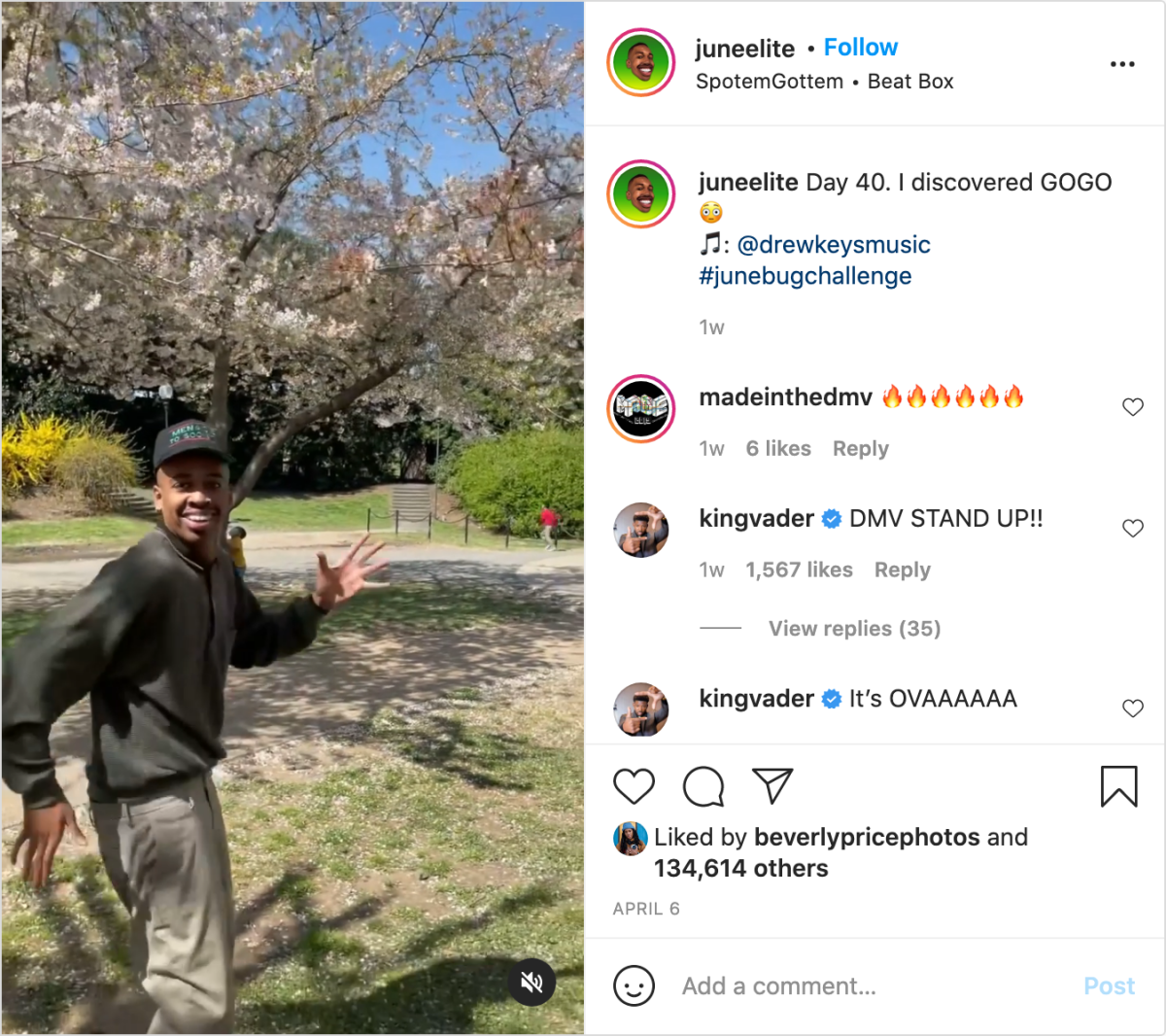 Junebug doing the Junebug Challenge in front of cherry blossoms.