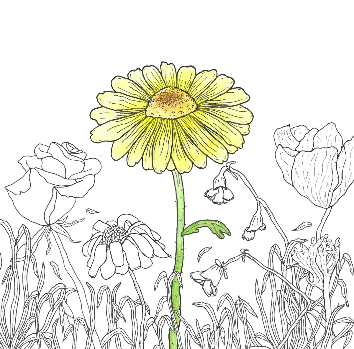 Illustration of yellow flower blooming