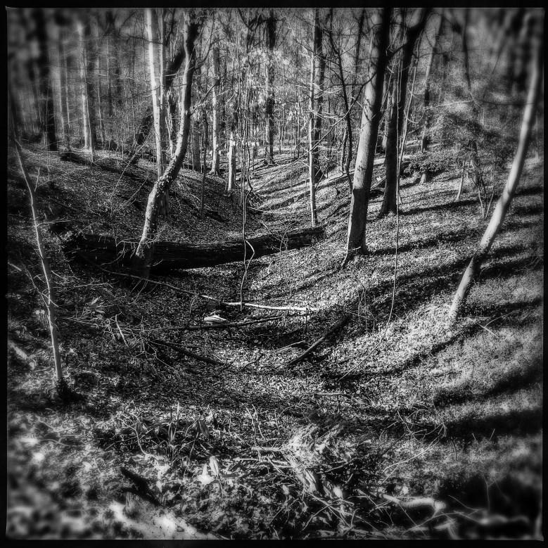 Rock Creek Park, April 2
