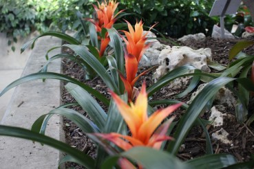 A fiery red and orange flower grows in Desert Biome Photo By: Abbagail Ramirez
