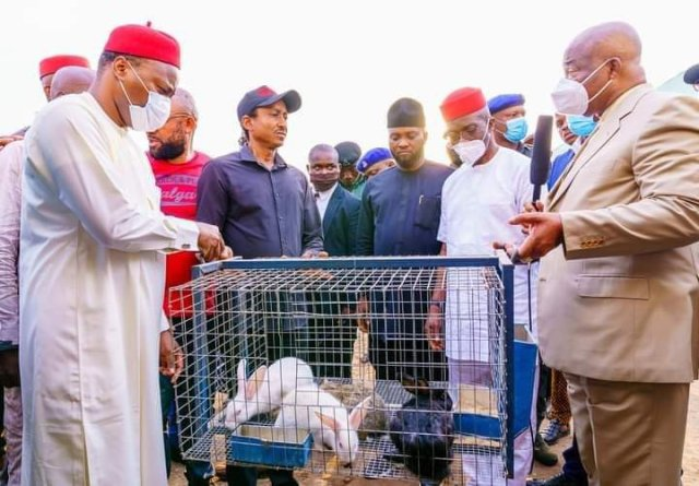 Imo State Governor Empowers Unemployed Youth With Rabbits-See Details