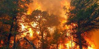 bahaya-asap-akibat-kebakaran-hutan-lahan