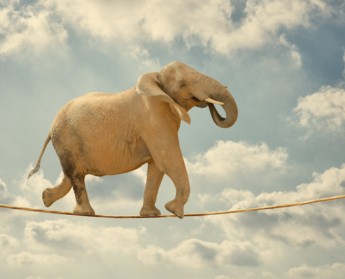 (Image) Balancing Elephant