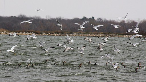 Birds at Braunig Lake