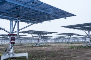 "9,000 steel ""trees"" will cover the finished Alamo 5 solar farm."