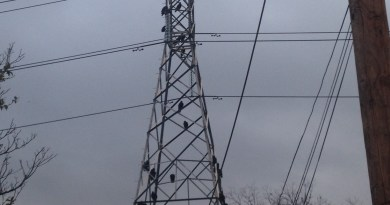 Image of vultures on CPS Energy transmission tower