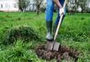(Image) digging