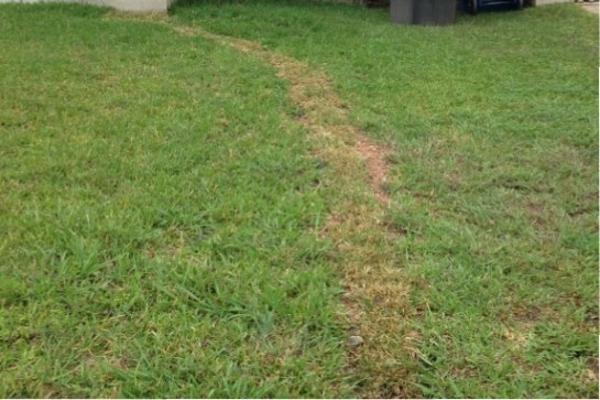 (Image) After the work is completed, my yard almost looks back to normal.
