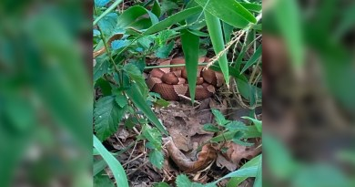Cooperhead snakes found in yard by CPS Energy Meterman