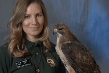 An image of Hailey Quirk, a traveling scientist with Inside the Outdoors, with a red-tailed hawk named Apollo