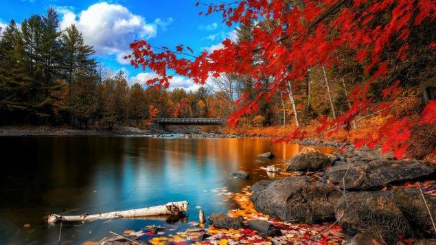 Осінь в Торонто