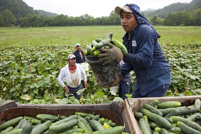 North Carolina needed 6,500 farm workers. Only 7 Americans stuck it out.