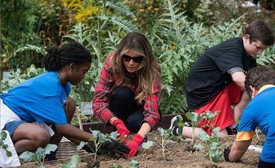 melania in white house vegatable garden - Melania Trump harvests Michelle Obama's vegetable garden