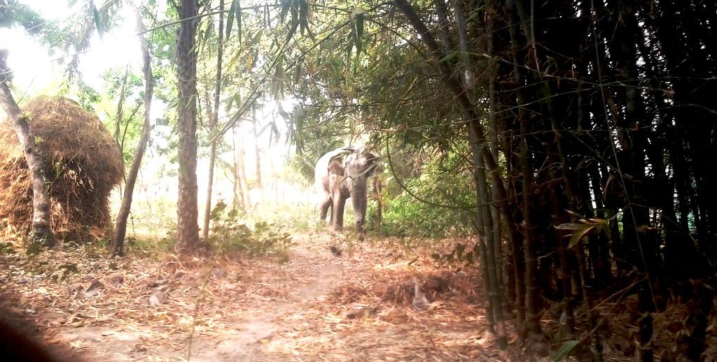 जङ्गली हात्तीको आक्रमणबाट एक महिलाको मृत्यु