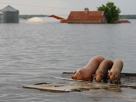 Das Märchen von Schweinegrippe und Klimawandel