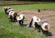 Farming activities resume in Jigawa