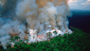 Recent Amazon fires could could strike a blow to fighting  climate change