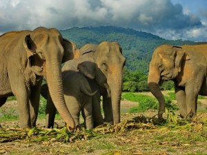 The coronavirus pandemic has halted tourism, and animals are benefiting from it