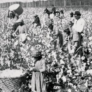 Cotton called out for remarks saying slavery had been a necessary evil