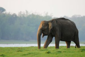Documentary: Elephant and Human Clashes in India