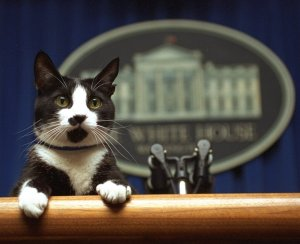 Celebrating Bi-Petisanship: The Bidens say Champ and Major will be Joined by a Cat in the Biden White House