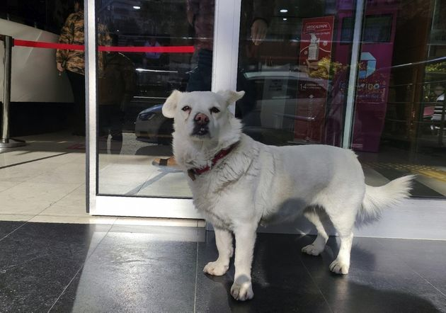 Something sweet: A dog waits for days outside Turkish hospital for her owner