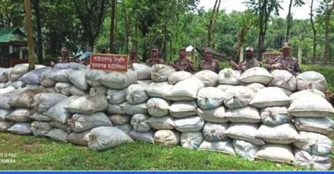 তাহিরপুর সীমান্তে বিজিবি কর্তৃক ভারতীয় গাঁজা ও কয়লা আটক