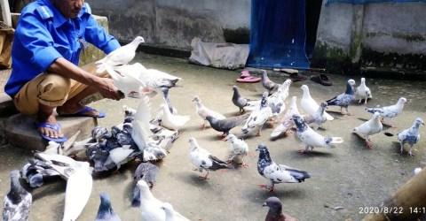 সাপাহারে কবুতর পালনে স্বাবলম্বী গ্রাম পুলিশ আবুল কালাম